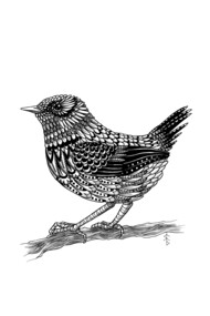 Zentangle Wren - Small Bird