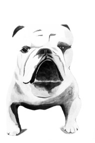 Watercolor Black and White Bulldog